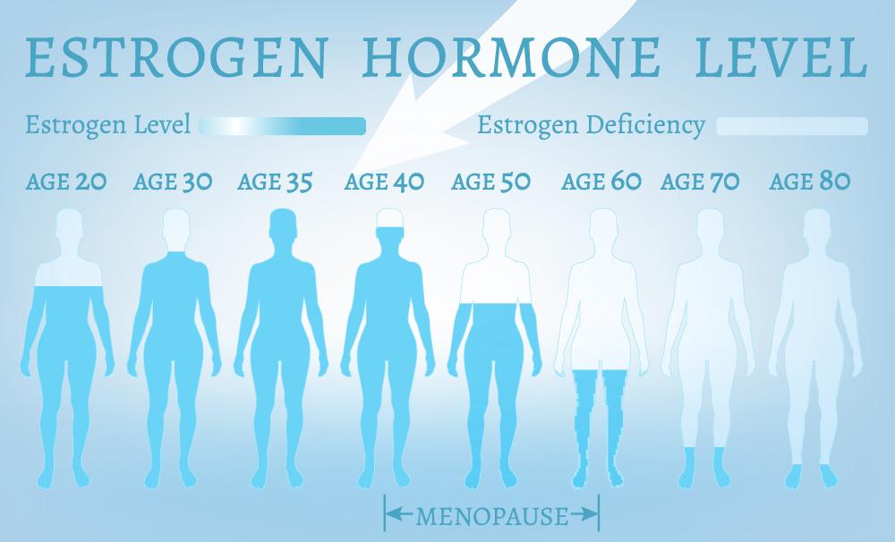 female hormone level chart
